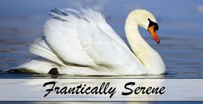 Frantically Serene
